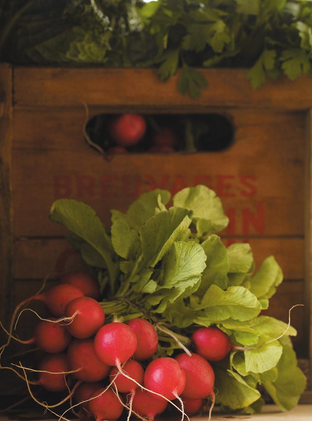 Salade fraîche d'automne aux radis, aux pommes et au navet blanc ...