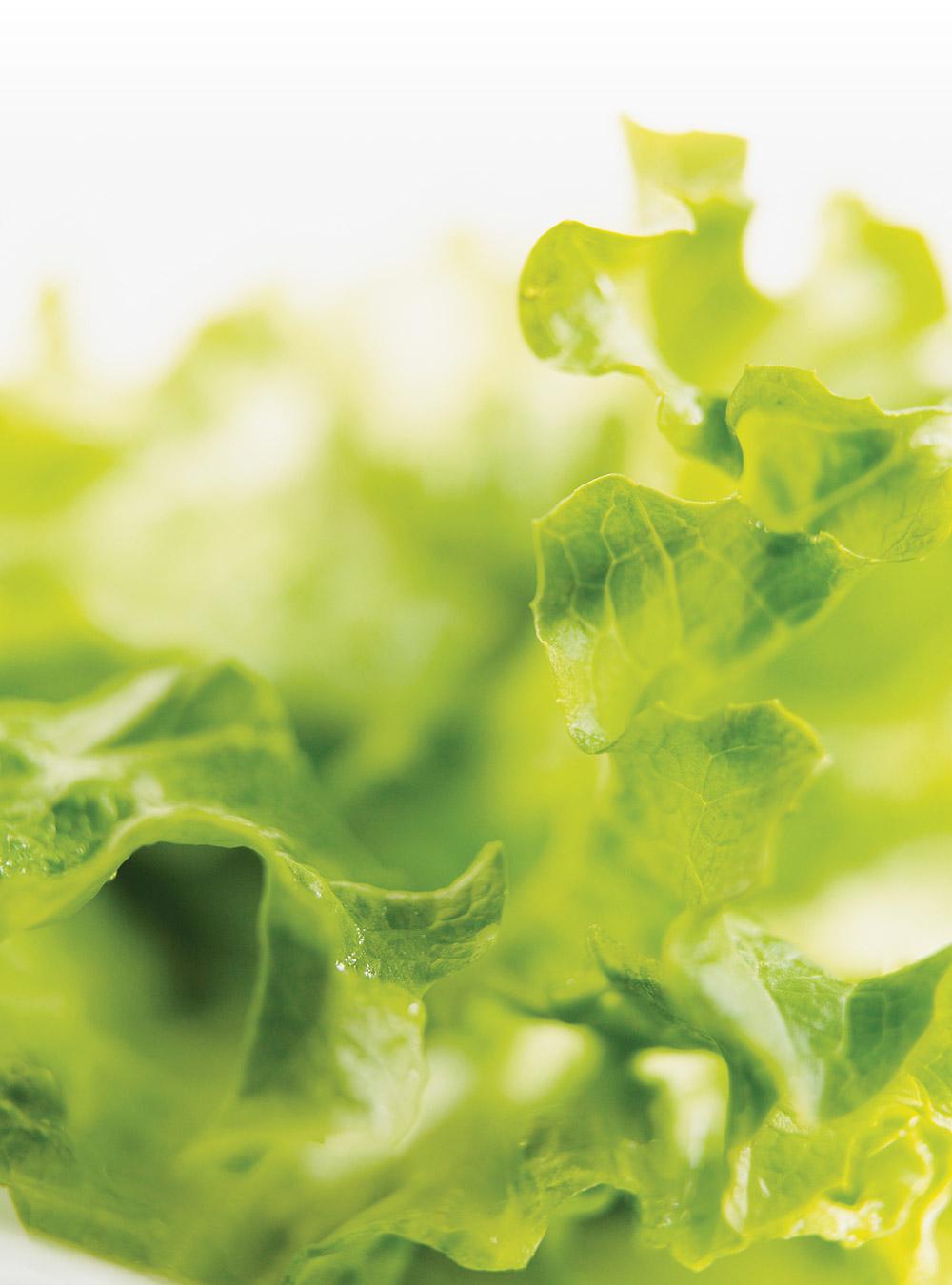 Salade verte à la moutarde | ricardo