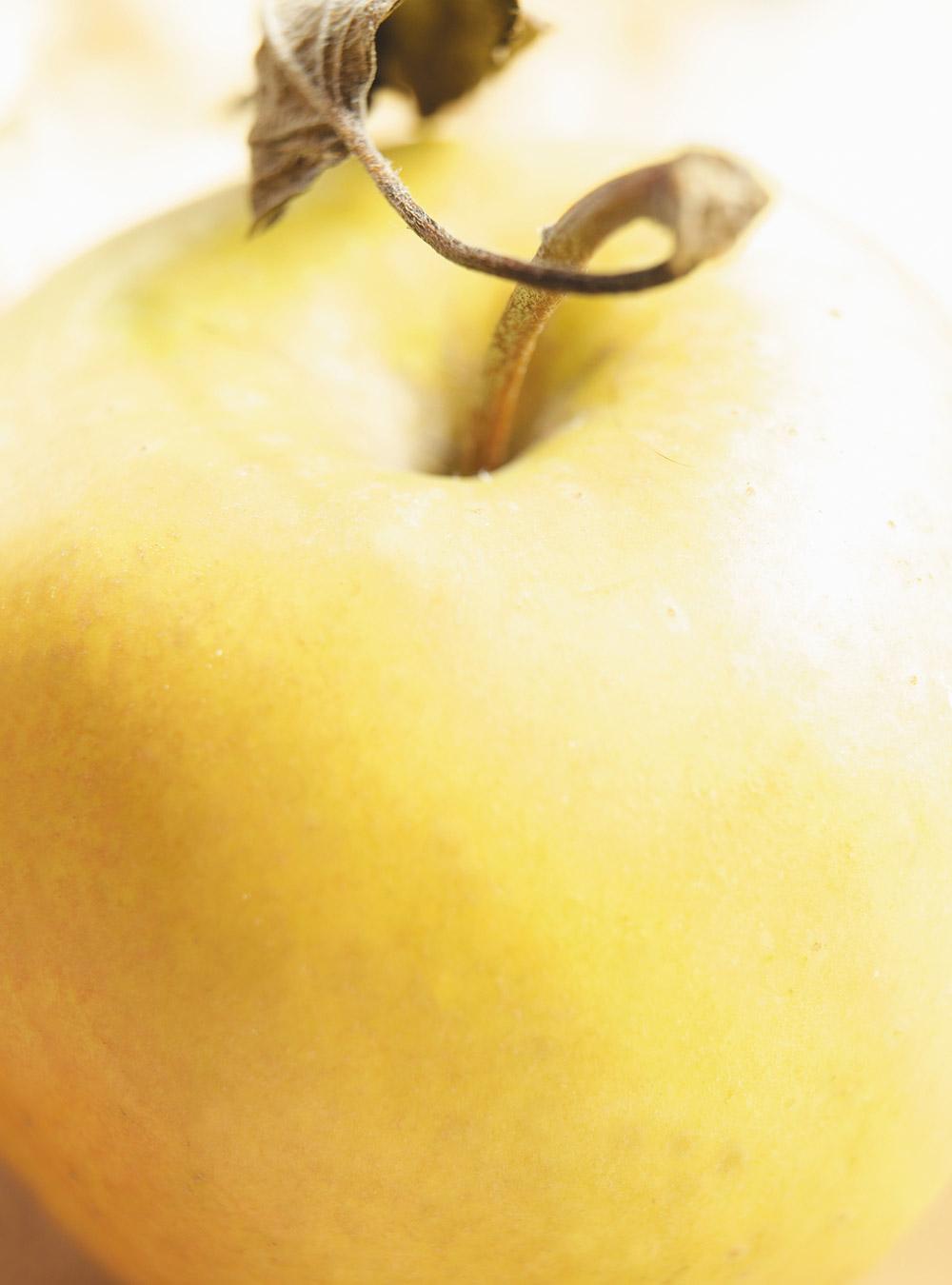 Beignets de pommes   ricardo