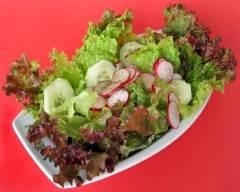 Recette salade frisée aux concombres et radis