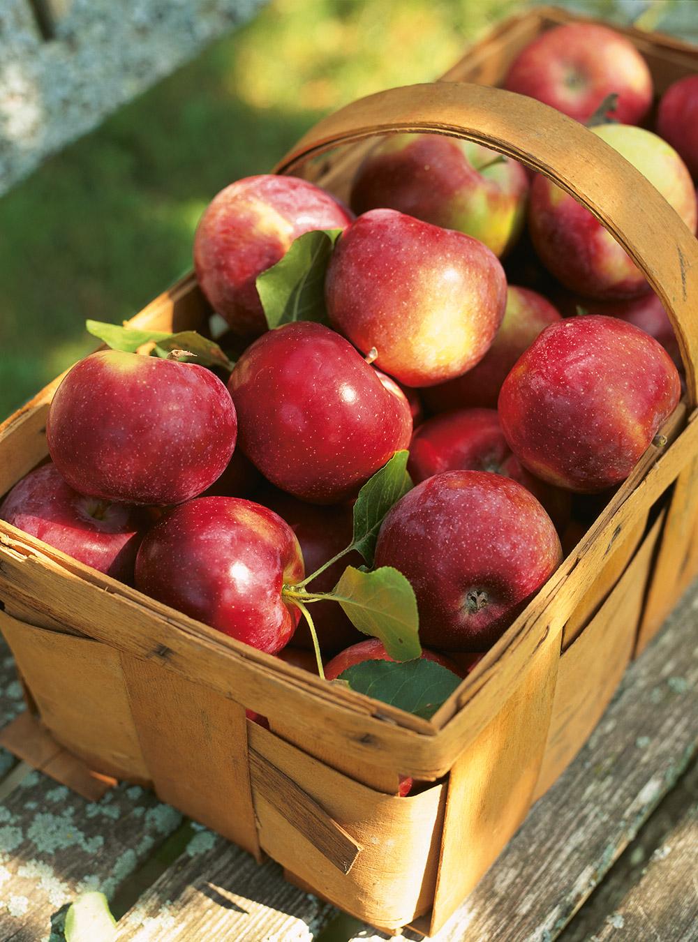 Gelée de pommes | ricardo